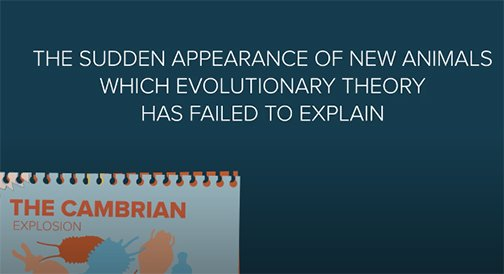 Questions on the Cambrian Explosion